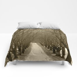 Tree Lined Road Comforters