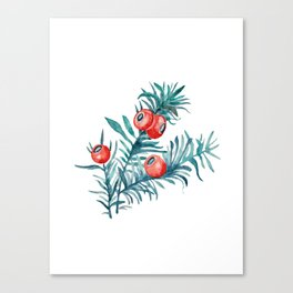 Watercolor Yew Berries Canvas Print