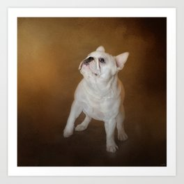 Little Beggar - White French Bulldog Art Print
