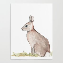 Rabbit Watercolor Poster