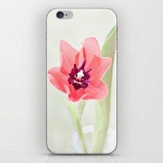 Pretty Pink Tulip iPhone & iPod Skin