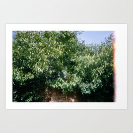 Leaves of Finchley Art Print
