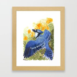 Blue Jay in the Cassia Thicket Framed Art Print