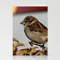 sparrow Stationery Cards featuring Sparrow by IowaShots