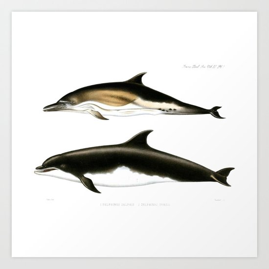Vintage Dolphins Nautical Porpoise Whale Antique Beach House Dolphin Print  Art Print By Igallery Society6