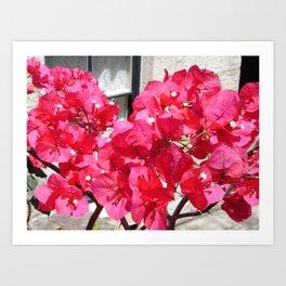 Hot Pink Bougainvillea Art Print