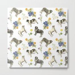 Saint Bernard dogs in the Alpine meadow Metal Print