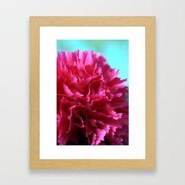 Pink Double Carnation Framed Art Print