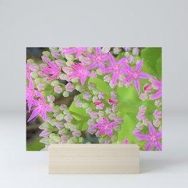 Hot Pink Succulent Sedum with Fleshy Green Leaves Mini Art Print