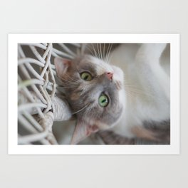Dilute Calico of the Cute Variety Art Print