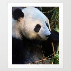 Panda Nap Art Print