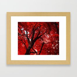 Red Canopy Framed Art Print