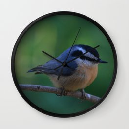 A Red Breasted Nuthatch Wall Clock
