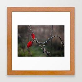 Two red leaves Framed Art Print