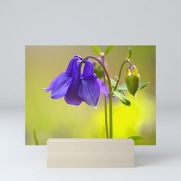 Purple Columbine In Spring Mood Mini Art Print