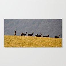 Exmoor Deer Canvas Print
