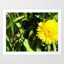 A Yellow Flower Art Print
