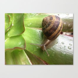 Snail on a Mission Canvas Print