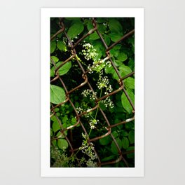 Flowers in the Chainlink Fence Art Print