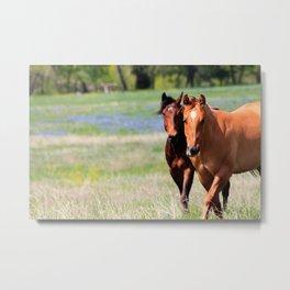 Horses & Bluebonnets II Metal Print