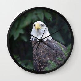 National Aviary - Pittsburgh - Bald Eagle 2 Wall Clock