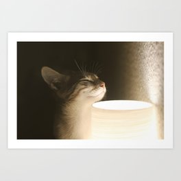Cat by the Light Art Print