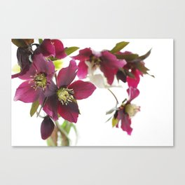 Flower impression Canvas Print