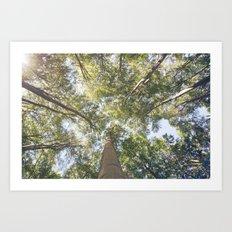 woodland 3436 Art Print