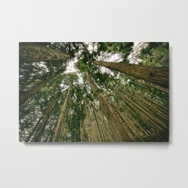 Trees Forest Metal Print