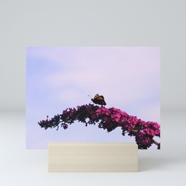 Small tortoiseshell butterfly on buddleia Mini Art Print