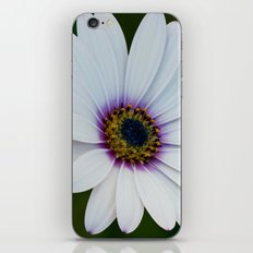 Blue Eyed Daisy III iPhone & iPod Skin