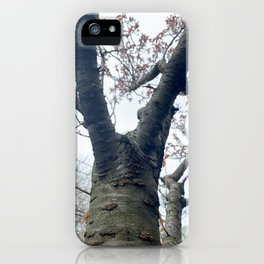 Tree after Winter iPhone Case