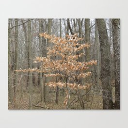 Beautful tree in John Heinz Wildlife Refuge Canvas Print