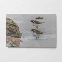 Pair of Plovers on the beach Metal Print
