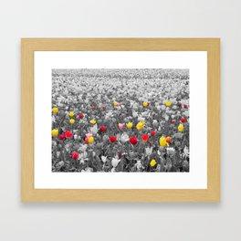 Burst of Color Framed Art Print