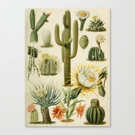 Naturalist Cacti Canvas Print