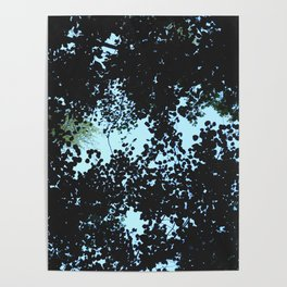Tops of the leaves of trees silhouettes Poster