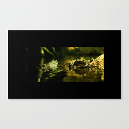 Green Frogs Canvas Print
