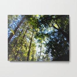 Santa Cruz Big Trees Metal Print