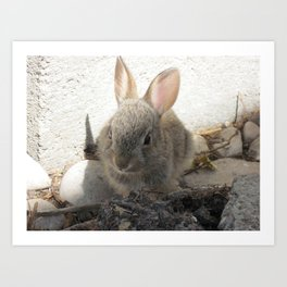 Baby Cottontail Art Print