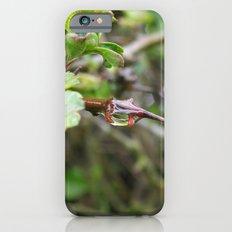 Raindrops on Thorns. iPhone 6s Slim Case