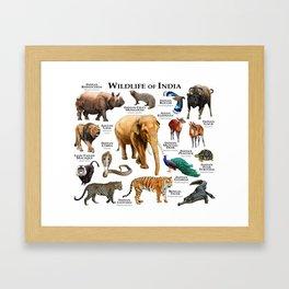 Wildlife of India Framed Art Print