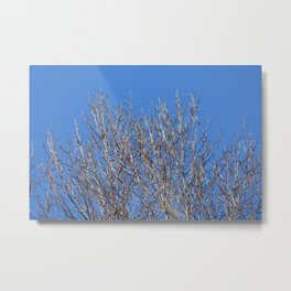 icy branches in sunlight Metal Print