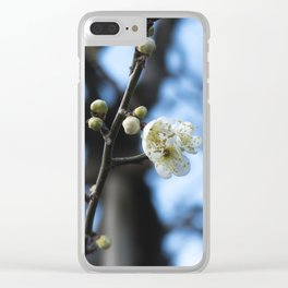 White plum blossoms and buds Clear iPhone Case