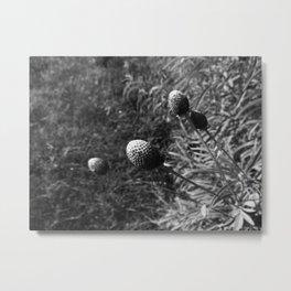 Prairie in Black and White Metal Print