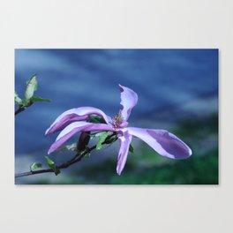 Greeting Magnolia Canvas Print