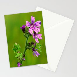 Common Mallow (Cheeseweed) Stationery Cards