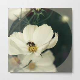 Wild flower in white Metal Print