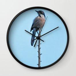 Bird - Scrub Jay Wall Clock