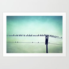 Aqua Birds on Wire Photography, Teal Bird on Wires, Turquoise Nature Art Art Print